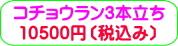 商品番号ZK-001 コチョウラン3本立ち:10500円