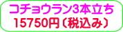 商品番号ZK-002 コチョウラン3本立ち:15750円