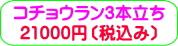商品番号ZK-003 コチョウラン3本立ち:21000円
