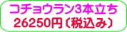 商品番号ZK-004 コチョウラン3本立ち:26250円