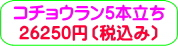 商品番号ZK-006 コチョウラン5本立ち:26250円