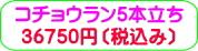 商品番号ZK-008 コチョウラン5本立ち:36750円