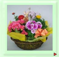 ギフト用花鉢物籠セット