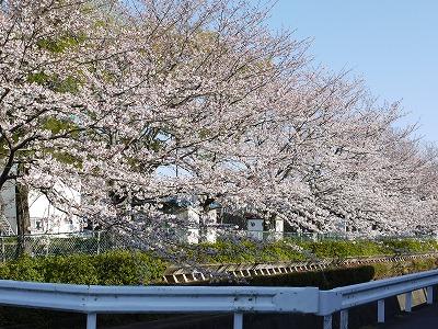 サウスステーション 目の前の桜の公園
