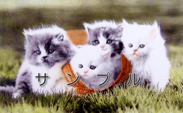 色鉛筆画 猫