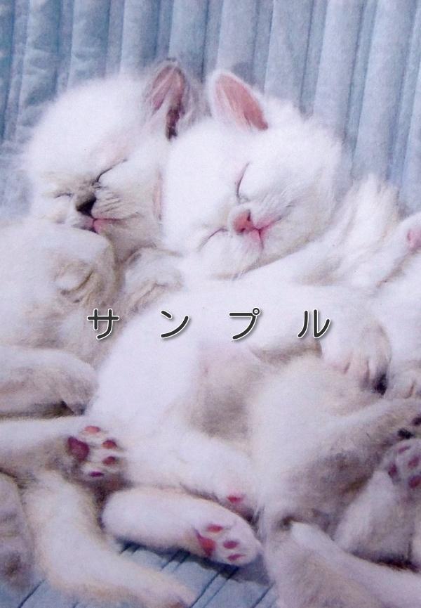 猫の色鉛筆画