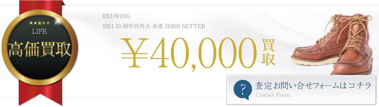 1951 50周年四角犬 赤茶 IRISH SETTER ~4万円買取