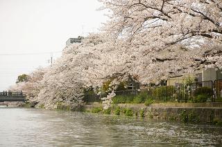 4月の花(桜)