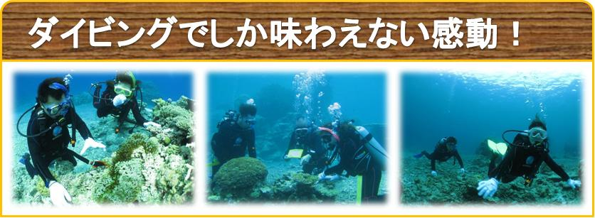 石垣島で体験ダイビングツアー