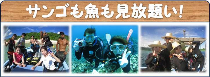 石垣島でファンダイビング