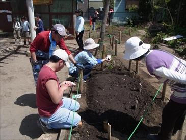 カブクワハウスの黒土で野菜を育てよう