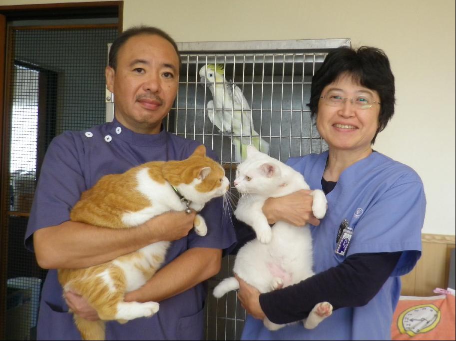 高村動物病院 印西市 印旛郡栄町 犬猫小鳥診療