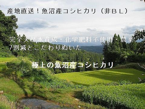 魚沼産コシヒカリ,最高級,通販,激安